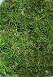 Dschungelmoos grün Spanisch Moos Tillandsia 1000g